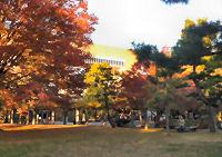 紅葉の清澄公園から眺めた中村中高。最上階が空中図書館『コリドール』。